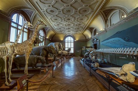 Best natural history museums in the world