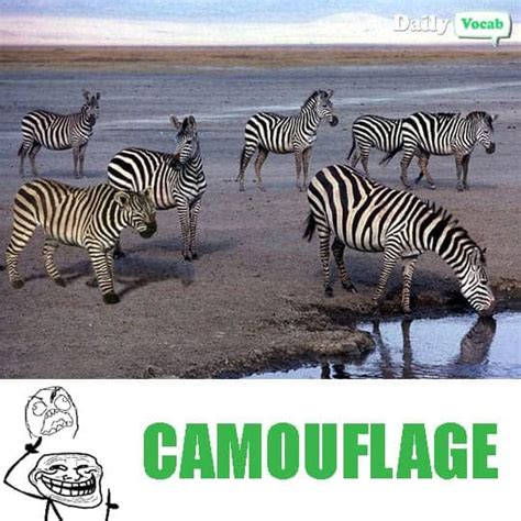 Camouflage Meaning in Hindi, Camouflage Meaning in English