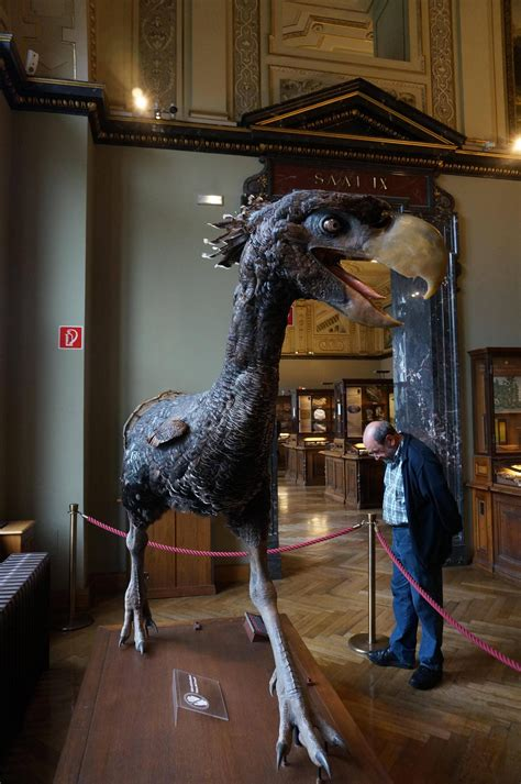 Terror-bird   this is awesome!!!   Prehistoric animals